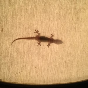 Gecko lampshade ombra shadow lampshade gecko geco mauritius ilemaurice eveninghellip