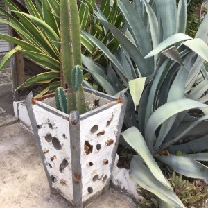 Old tubes anyone? perfect gardenpot cactus love urbangardening oldtubes beautifulhellip